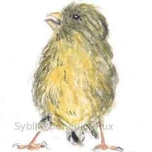 Vogelillustration
