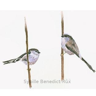 Vogelillustration Schwanzmeisen