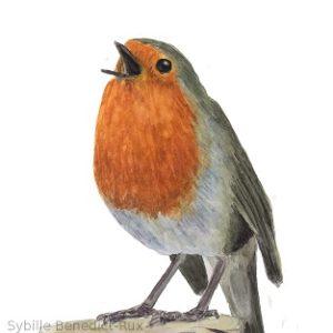 Ein singendes Rotkehlchen in Aquarell